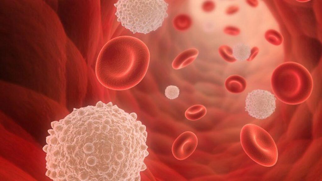 chỉ số thành phần bạch cầu trong máu